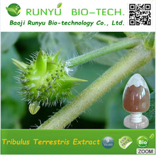 RUNYU 2017 Free Sample Tribulus Terrestris20%- 95% Bulk Powder/ Tribulus Terrestris Fruit Extract Powder