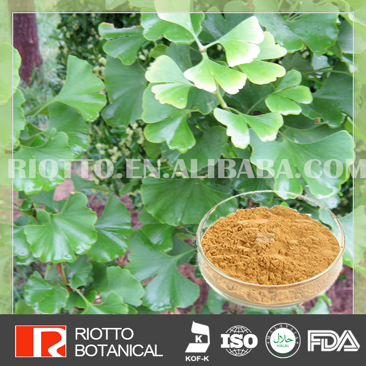 best quality & competitive price ginkgo biloba extract Total flavone glycosides 24%