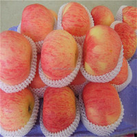 Wholesale China Fresh Red Fuji Apple Fruit Best Price