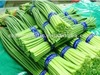 Fresh Green Garlic Sprouts 2012 New Crop--High Quality