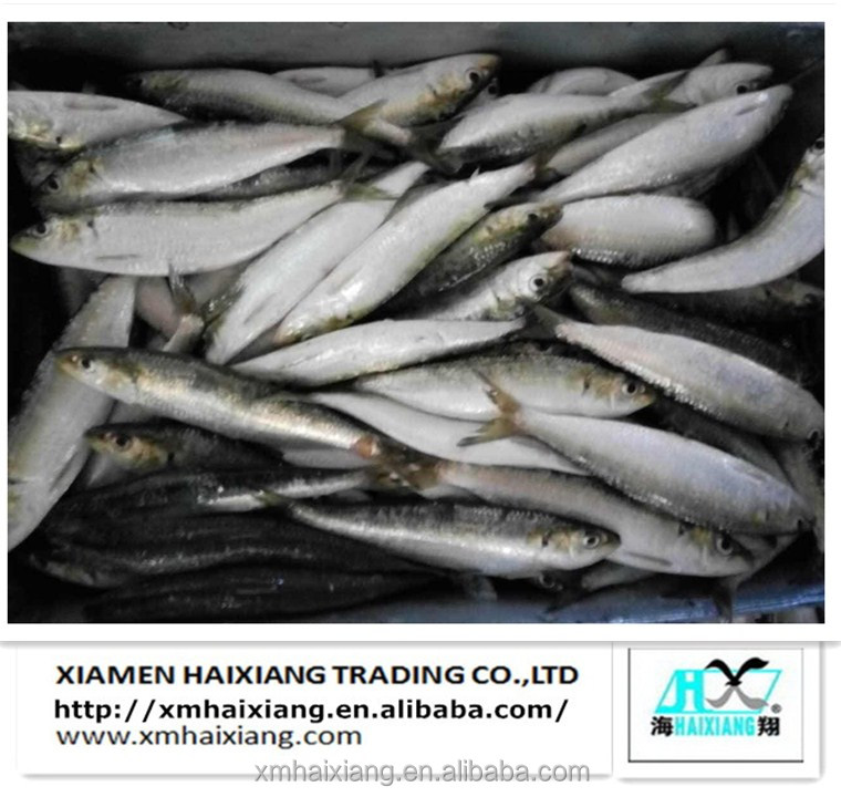 80-90pcs/ctn frozen sardine fish for sale