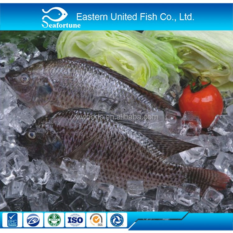 China Wholesale Frozen Seafood Tilapia Trading Companies