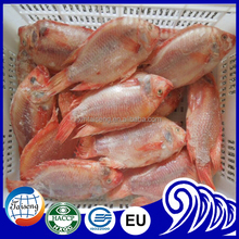 Good Specification From indonesia Fish Selling Red Tilapia For Sale