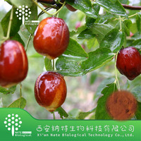Natural Wild jujube powder From Gmp Manufacturer