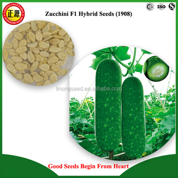 LINONG new bred excellent quality and high yield LY zucchini F1 hybrid seeds