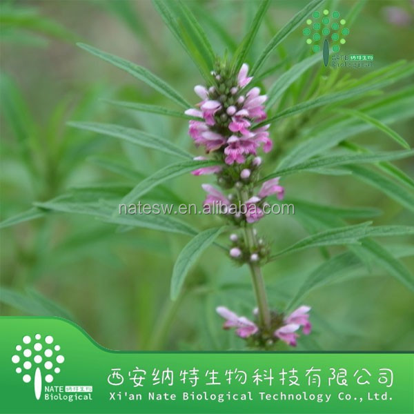 Chinese Natural Plant Extract / Motherwort Herb Extract/10% Stachydrine/ HERBA LEONURI