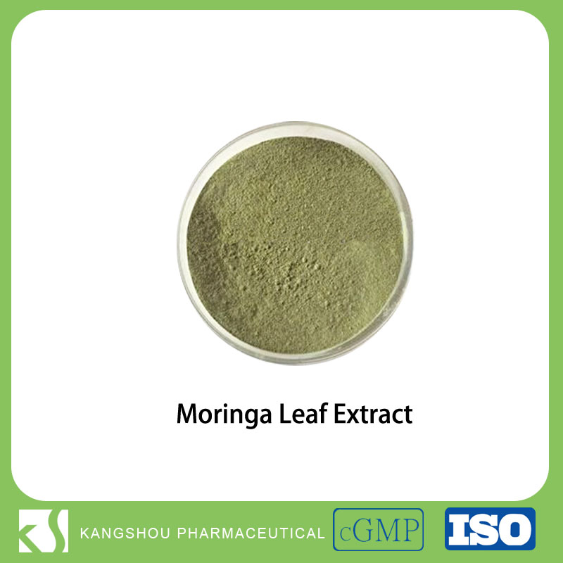 Rich in Vitamins A,B,C 10:1 Moringa oleifera Extract / Moringa Leaf Extract Powder