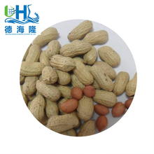 Chinese high quality good price large quantity raw peanuts, 2017 crop's coming