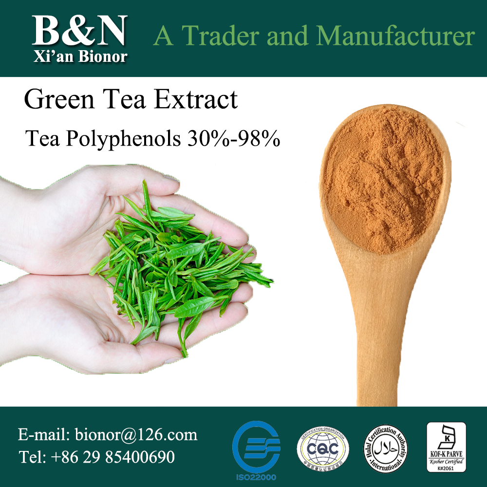 Good price natural green tea extract With ISO9001 Certificate