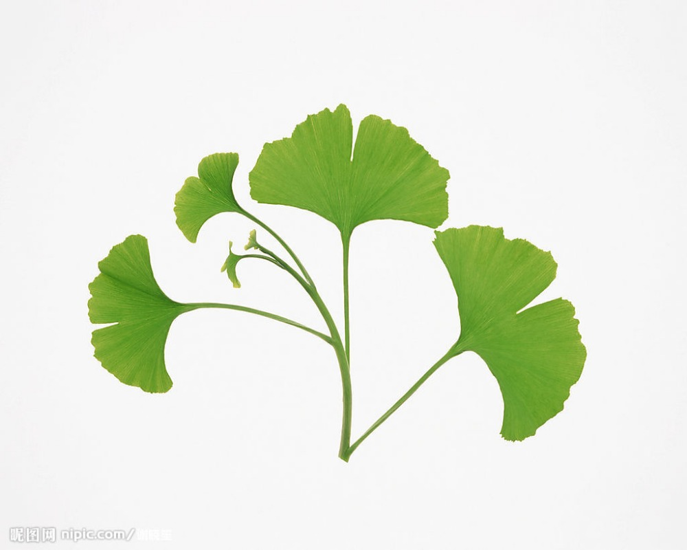 High quality Natural herbal extract Ginkgo Biloba leaf extract 24%/6% USP Ginkgo extract Powder