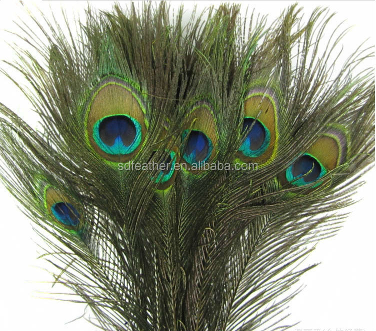 natural peacock feather for home decoration buy peacock 10pcs natural real peacock feather house decoration alex nld