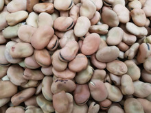 2017 crop Dried Broad Beans / Fava Beans 80-100pcs/100g