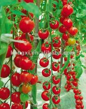 high yield TOP QUALITY RED TOMATO SEEDS