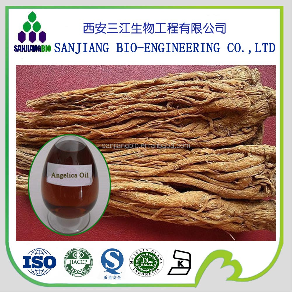 hot selling angelica root extract powder/angelica p.e dong quai