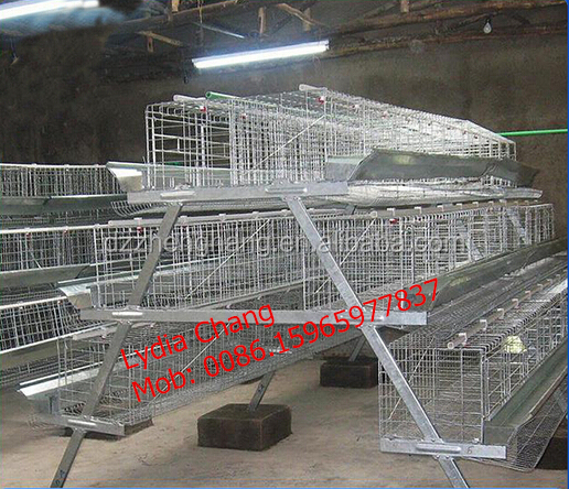 Kenya and Nigeria hot sale high quality poultry chicken cage / battery cage (lydia : 008615965977837)
