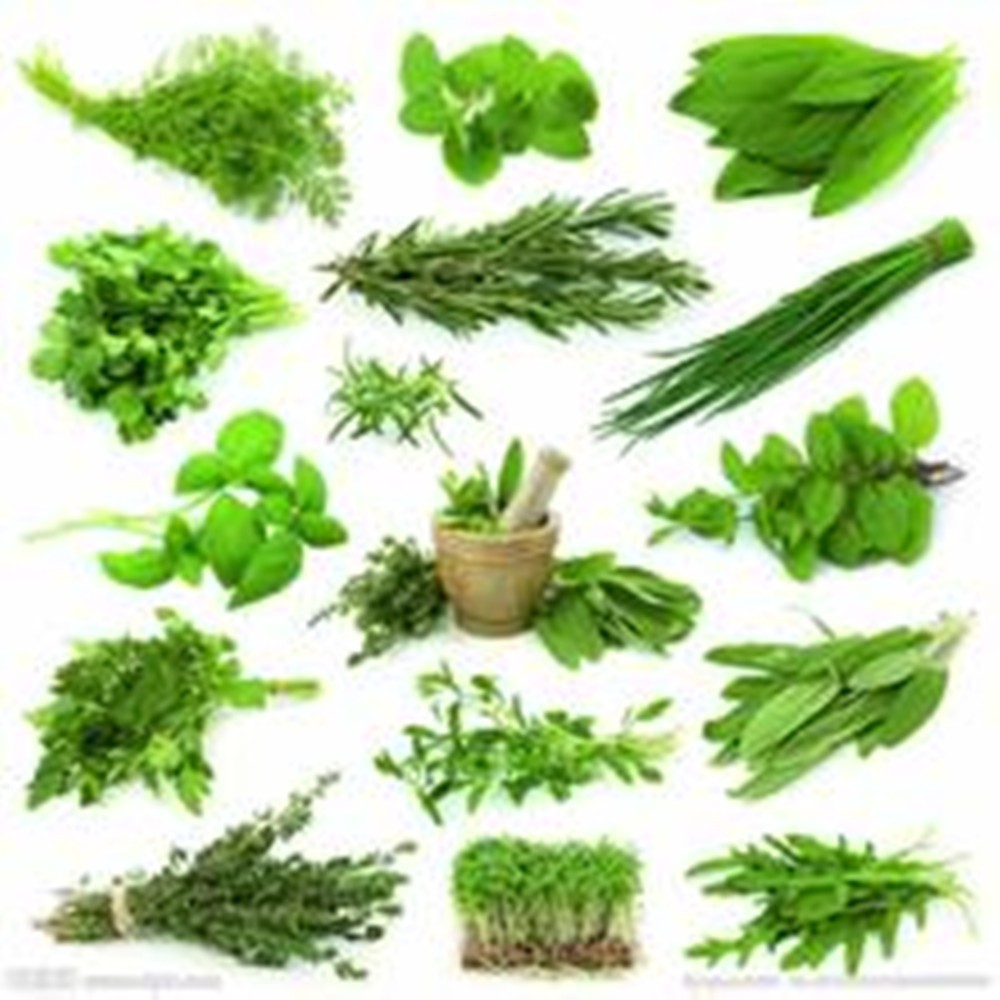 Buy/Purchase Best quality herbal extract/botanical ingredients