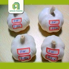Hot selling 5.5cm normal white garlic packed in 10 kg/ctn
