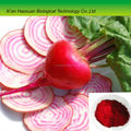 Factory supply pure natural red beet powder with competitive price