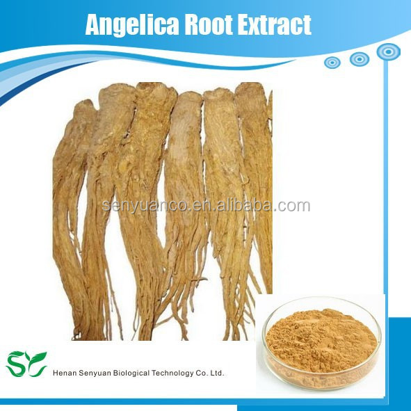 Women health care Angelica sinensis extract/angelica root extract