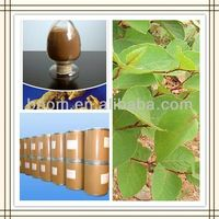 high quality giant knotweed extract/resveratrol 98%