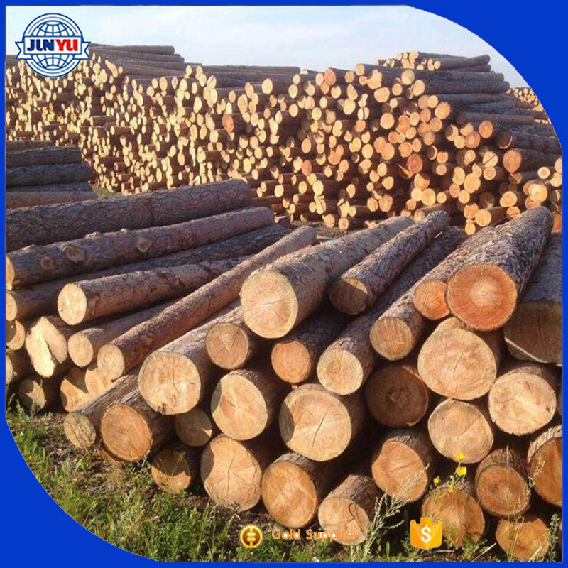 30cm + diameter 6 meter length radiation pine logs for sale