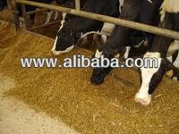 Animal Compound Feed