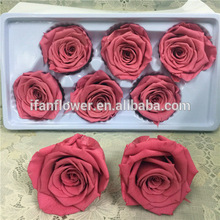 Christmas best choice wholesale preserved natural flowers