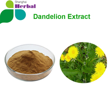 Dandelion root extract,Herba Taraxaci,Dandelion root extract powder