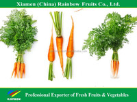 Xiamen China Fresh Red Carrot for hot sell