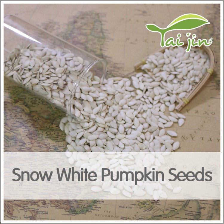 hot selling pumpkin seed harvesters
