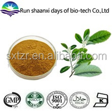 Natural Ilex paraguariensis / Paraguay Tea plant extract / Yerba Mate Extract Powder