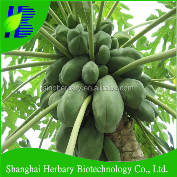 2017 Hot sale fruit tree seeds papaya seeds for sowing