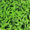 Artificial hedges garden cheap fence plastic leaf fence