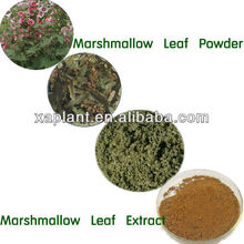 Marshmallow Leaves/Marshmallow Extract 10:1 20:1 - 100% Natural Tobacco Raw Material