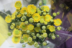 Wholesale fresh cut long stem chrysanthemum cuttings flower