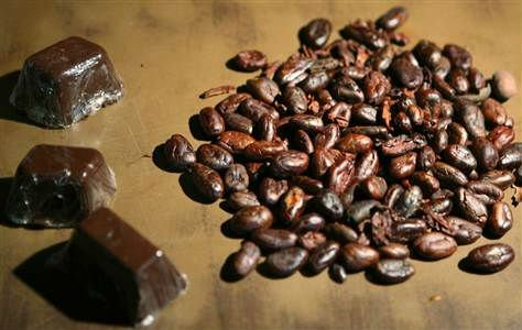 High Quality Cocoa Beans for sale