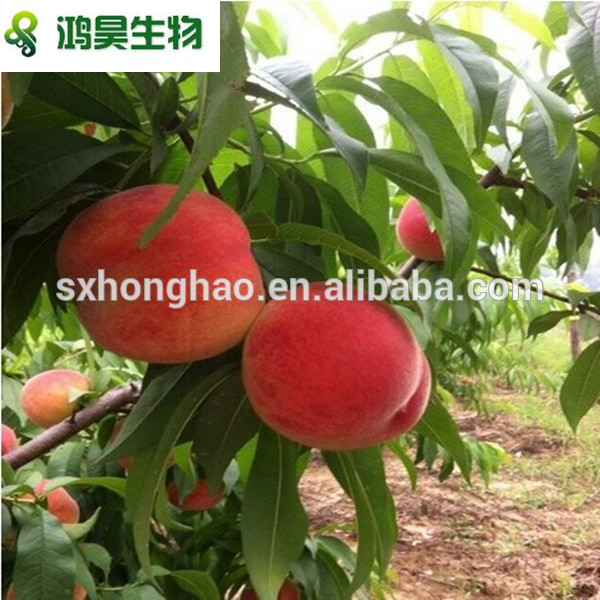 high quality new product peach powder