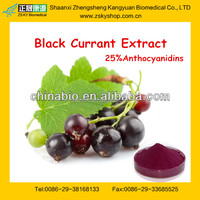 black currant extract from GMP supplier