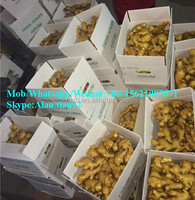 Supply fresh ginger and air dried ginger packing in 20kg mesh bag