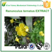 ISO manufacturer Ranunculus ternatus extract for health care