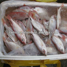 iqf frozen food and for sale doctor fish