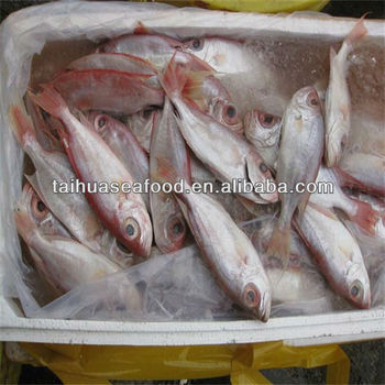 Iqf frozen food and for sale doctor fish buy for sale for Doctor fish for sale