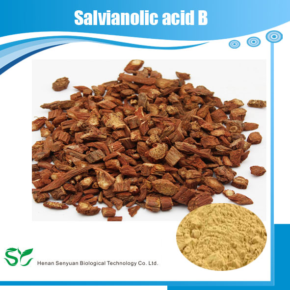 A traditional Chinese herb extract Salvianolic Acid B from Salvia root