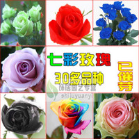 High Germination Rate Rose Flower Seeds For Planting