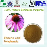 Factory supply Chinese herb extract Echinacea Purpurea Extract 4% Polyphenols