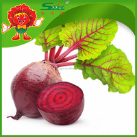Chinese fresh red beetroot for sale