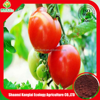Pure natural plant extract tomato extract with high quality lycopene