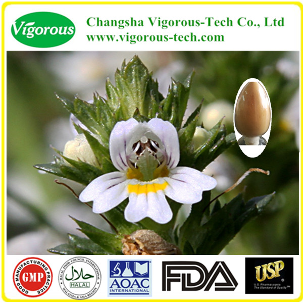 High quality eyebright extract/Euphrasia officinalis powder/Natural eyebright extract powder 10:1