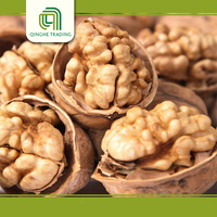Brand new walnut in thin shell with low price chilean walnuts