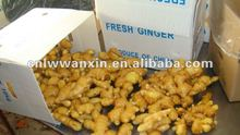 anqiu ginger buyers and exporters